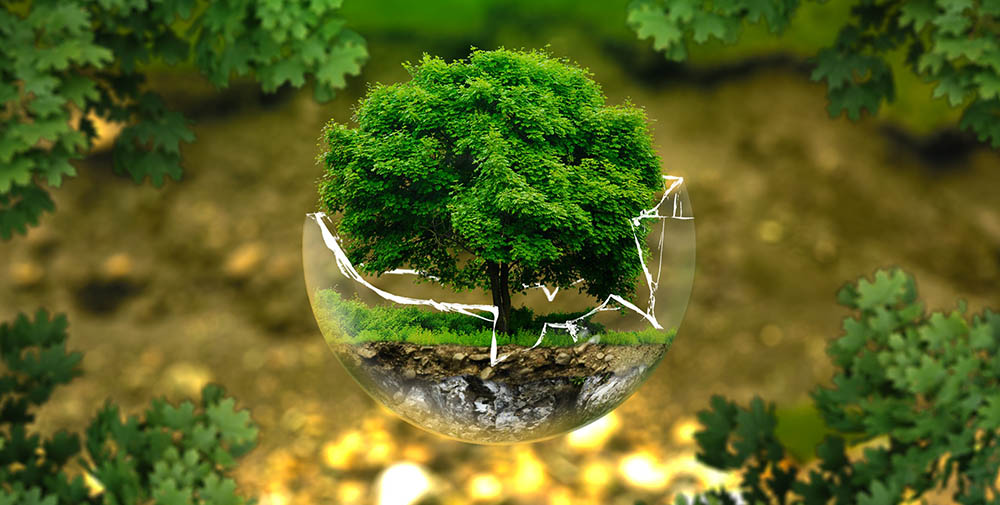 Lotus Holistic Medicine - Environmental Acquired Illness